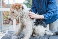 Top 10 Cheap Dog Beds for Proper Rest  http://petcaresunday.com/cheap-dog-beds/