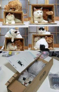 cat & box - SOMEONE KIL LME IA EGAHRGHNKJ