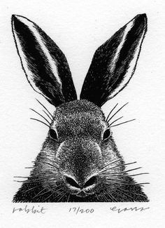 Rabbit wood engraving by Sea Dog Press via Etsy.