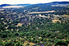 Cien por cien de campo  Ciudad Real #nature #photography