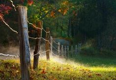 fence in mist