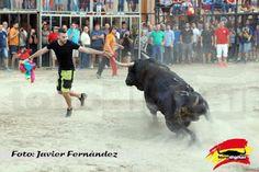 torodigital: Continúan los festejos taurinos en Almenara