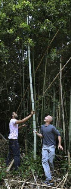 @Mitchell Pavao Weinstein of Richmond & Lewis Ginter Botanical Garden team up to help students make musical instruments out of bamboo, an invasive species.  Via @Christie Edens Times-Dispatch,  Richmond Times-Dispatch: Home