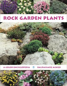 Rock garden Plants - I would love this!
