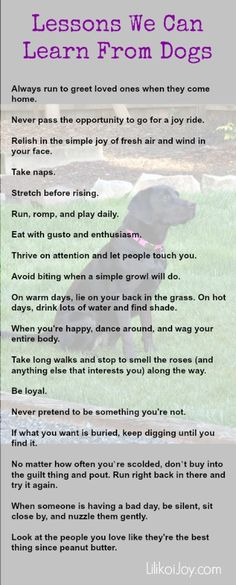 Lessons learned from dogs. The only one I disagree on is thrive on attention and let people touch you