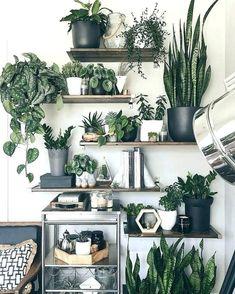 899 Best Artificial Plants Decor Yards