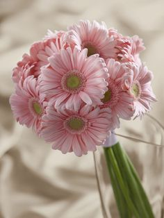 Save up to on Light Pink Gerbera Daisy Braidesmaid Bouquets. Buy Daisy Braidesmaid and Bridal Bouquets online and Wholesale Braidesmaid Bouquets BunchesDirect Daisy Wedding Flowers, Prom Flowers, Beautiful Flowers, Bridesmaid Flowers, Pink Bridesmaids, Bridal Flowers, Green Wedding, Gerbera Daisy Bouquet, Pink Gerbera