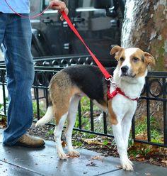 Sassy - City Dogs Rescue (Washington, D.C.)