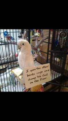 Bird Shaming lol
