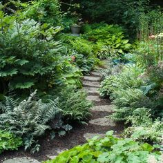 Shade garden pathway. Tall astilbe starting to bloom on right. Lots of different ferns, ginger, hostas, huechera. The taller plant on left is likely an actea (baneberry). Mom has some of those you could dig up. On the right, hidden behind the alchemilla, is variegated polemonium, hardy to z4 and preferring shade. GET IT. #GardenPath