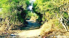 Tree tunnel at 450  years old Beru village  by Pravin Bagga
