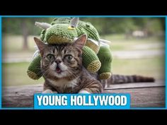 Well, look what the Internet dragged in! Lil Bub, the world's most famous perma-kitty, stops by the Young Hollywood Studio to get the star treatment! From lounging on our couch to getting her ears scratched by host Nikki Novak, it's good to be a viral sensation! Be sure to visit Lil Bub's Facebook Page for more unstoppable cuteness: https://www....