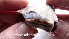 Petrified Wood Agate Rough 120 Gr