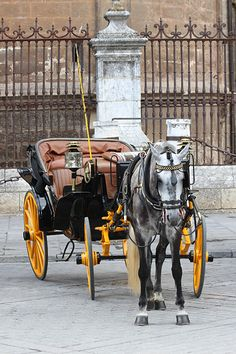 Horse and Carriage - Seville Spain