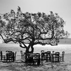 The #tree by Simon Bode #bw_greece #naxos #greece #blackandwhite #photooftheday #nofilter #seaside #beach #summertime  This #photoart helps @seawatch_lampedusa assist #refugee #boats in distress in the area between the coast of #Turkey and the #Greek island of #Lesbos