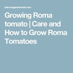 Growing Roma tomato | Care and How to Grow Roma Tomatoes