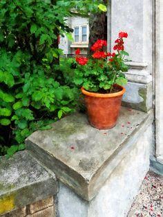 Google Image Result for http://images.fineartamerica.com/images-medium-large/pot-of-geraniums-on-stoop-susan-savad.jpg