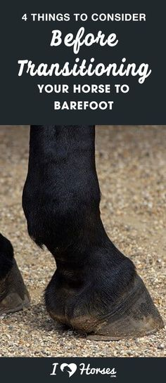 Have you ever thought about letting your horse go barefoot? Many horses can successfully go barefoot, but that doesn't mean that you should just decide to pull your horse's shoes and see. Think about these four factors when deciding whether to transition your horse to barefoot.