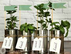 Tin Can Herb Planter