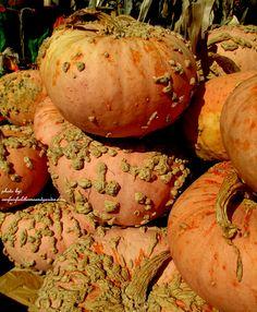 Farmstand ~ warty pumpkins via ourfairfieldhomeandgarden.com