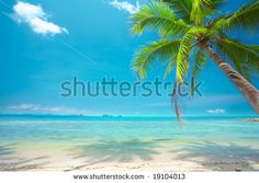 Tropical Beach Foto Stock 142999147 : Shutterstock