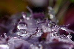 Close-up of rain drops on purple by alisa_max on Creative Market