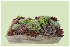This beautiful succulent arrangement in rustic wooden box would be a great wedding centerpiece or tabletop garden for your desk at the office.