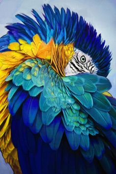 Blue and Gold by ApeironDiesirae on DeviantArt – Bird Supplies Pretty Birds, Beautiful Birds, Animals Beautiful, Cute Animals, Tropical Birds, Exotic Birds, Colorful Birds, Exotic Pets, Parrot Bird