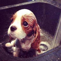 su primer baño.. no esta muy contento que digamos jaja tiene frio .