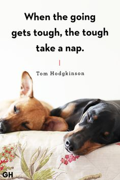 ❤️Hit That Share Button To Motivate Your Friends & Family❤️ ▬▬▬▬▬▬▬▬▬▬▬▬▬▬▬▬▬▬▬  #MondayMotivation #MotivationMonday #quotes  #quoteoftheday  #motivationalquotes  #PuppyLove  #PawPrints #Happiness #LancasterPuppies www.LancasterPuppies.com Puppy Quotes, Lancaster Puppies, Share Button, Take A Nap, Puppies For Sale, Monday Motivation, Friends Family, Motivationalquotes, Puppy Love