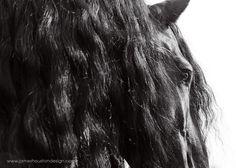 www.pegasebuzz.com | Equestrian photography : James Houston - Horse
