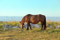 Check out Horse grazing in a meadow by jcfmorata - Photography on Creative Market Beautiful Landscapes, Horses, Sea, Sunset, Creative, Animals Photos, Photography, Check, Horse