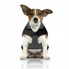 Milk & Pepper Dogs Waterproof Winter Coat Jacket - Sophisticated and Amazing Quality in Black