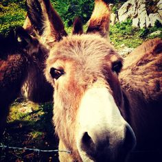 Friendly Donkey near Clifden
