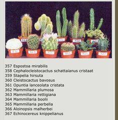 Nombre cactus y sucus – Cactus Types Of Succulents Plants, Cacti And Succulents, Planting Succulents, Planting Flowers, Cactus House Plants, Indoor Cactus, Rock Garden Plants, Cactus Names, Succulent Names