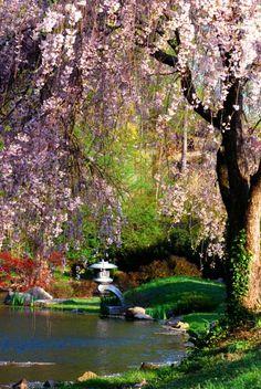 One of my favorite reading spots. Japanese gardens at Maymont, Richmond, VA