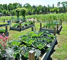 5 Tips for the First Time Vegetable Gardener