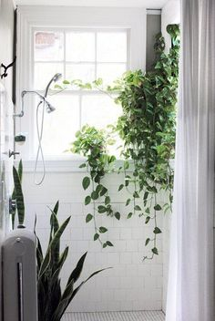 Make your bathroom a greenhouse by bringing the outside in. Hanging plants create a vining curtain and a snake plant draws your eye up. Easy to care for, these low maintenance indoor plants thrive on the little bit of humidity that is added to the air from the shower. White subway tile and a window in the bathroom make this space feel like a spa or outdoor oasis at home.