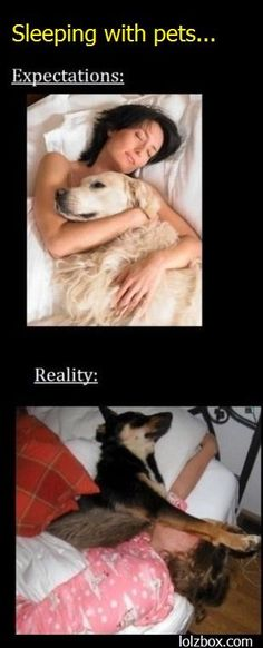 exactly what happens when i try to sleep with my dogs
