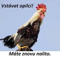 Good Morning, Funny Memes, Entertaining, Pictures, Petra, Alcohol, Marriage, Buen Dia, Photos