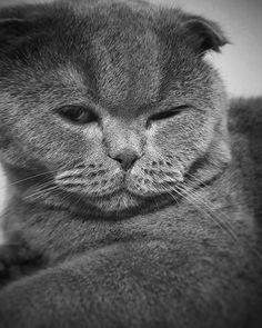 #photo #photos #pic #pics #catlovers #blackwhite #bw #cat My Photo Album, Photo S, Cat Lovers, My Photos, Black And White, Cats, Animals, Gatos, Animales