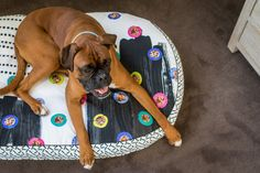 Colourful Dog Beds f