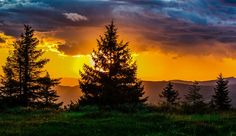 Sunset, Tree, Nature, Sun, Horizon