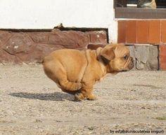 광속으로 달리는 강아지