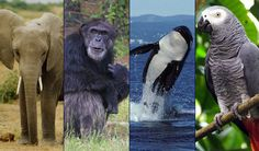 The Nonhuman Rights Project--If you are looking to support a nonprofit, I highly recommend the Nonhuman Rights Project.  Their work is groundbreaking and toward a more humane world. <3