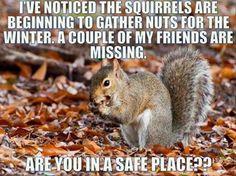 squirrel humor makes me laugh Funny Animal Quotes, Funny Animal Pictures, Funny Images, Funny Photos, Funny Animals, Cute Animals, Funny Squirrel Pictures, Weird Quotes, Animal Fun