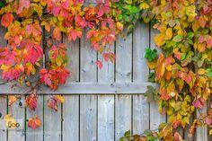 Autumn my favorite Autumn is here