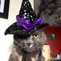 Riding Helmets, Halloween, Cats, Photos, Gatos, Pictures, Cat, Kitty, Spooky Halloween