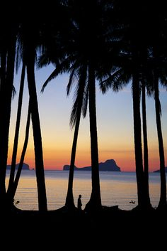 Philippines, Palawan Island, sunset through palm trees