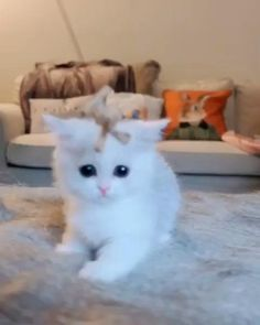 Welcome to the Memes Panda where you can find lots of cute, funny and adorable videos about Pets. Cute Little Kittens, Cute Baby Cats, Cute Cats And Kittens, Kittens Meowing, Baby Animals Super Cute, Cute Little Animals, Funny Cute Cats, Cute Funny Animals, Kittens And Puppies